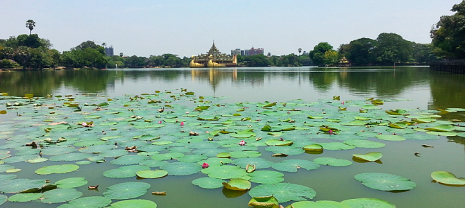 The Wettest Most Golden City – With Lotuses